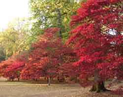 Some very red trees...